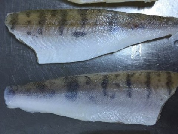 Pike Perch importers and wholesalers Canada | Sea-Ray